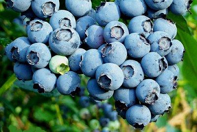 Anti-oxidant blueberries.