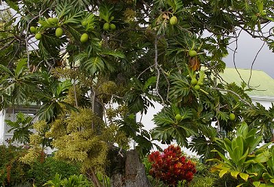 Low hanging breadfruit could have been picked by Donn.