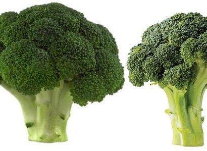 Broccoli upraised arms.