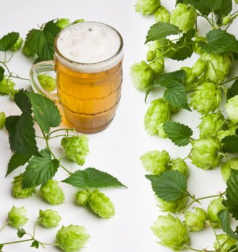 Hops and beer.