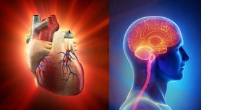Plaque in the heart and the brain mean serious problems for older adults.
