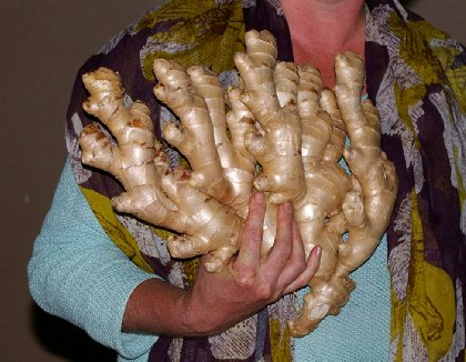 Ginger root - image.